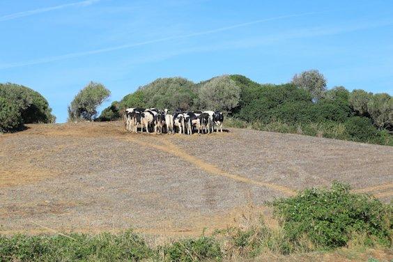 Milchwirtschaft im Norden: Kühe